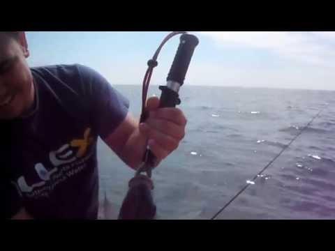 Pêche aux Bars st vaast la Hougue