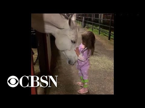 Xxx Mp4 Little Girl Soothes Horse In Viral Video 3gp Sex