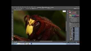 طريقة تصوير الماكرو بأبسط المعدّات و طريقة دمج مناطق التركيز البؤري بالفوتوشوب و تعديل الصورة