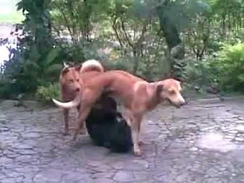 Xxx Mp4 Anjing Kawin 3gp 3gp Sex