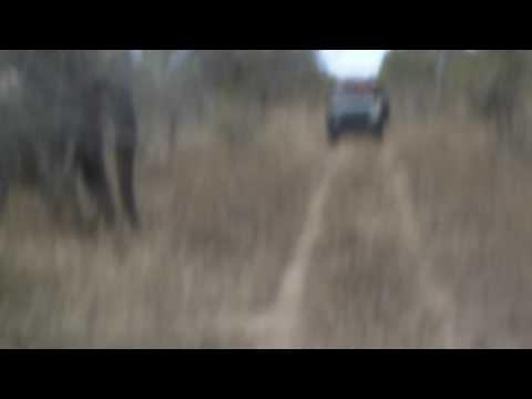 Xxx Mp4 GSC 0918 The Elephant Charge Shawn Silmiya Hendricks 3gp Sex