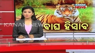 No Of Tigers Estimated At 40 In Odisha