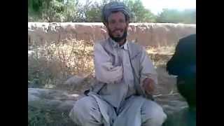 Osama bin Laden lebt.خنده دار, افغانی