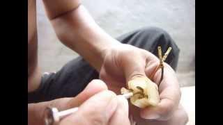 cara melepas kabel dari soket