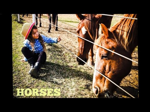 Xxx Mp4 Horses For Kids All About Horses Fun Horse Videos For Kids 3gp Sex