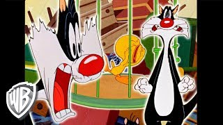 Looney Tunes | Best of Sylvester | Classic Cartoon Compilation | WB Kids