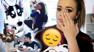 Where Did My Dog Theo Go?? | HeyItsSarai