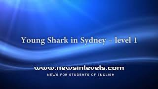 Young Shark in Sydney – level 1