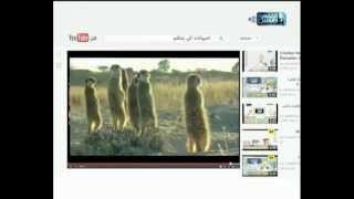 الحيوانات اللي بتتكلم القاهرة والناس
