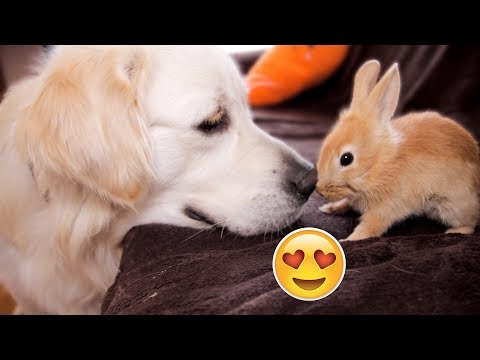 Xxx Mp4 Funny Dog Bailey And Cute Rabbit Sam Are Best Friends 3gp Sex