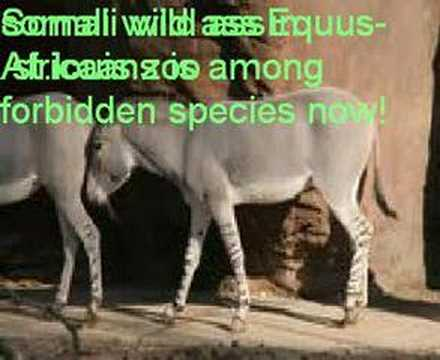Somali Wild Animals and it s Environment part 1