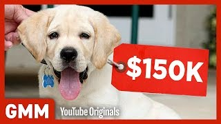 Most Expensive Pets on Earth (GAME)
