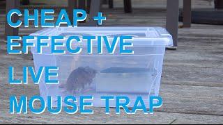 Mouse trap 3.0