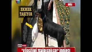 """""""Köpeğimi zehirlediler"""" iddiası"""