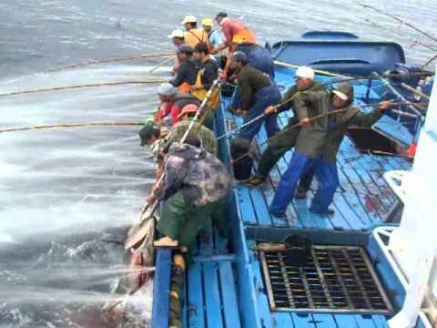 Mal amanhado Pesca do Atum 2011