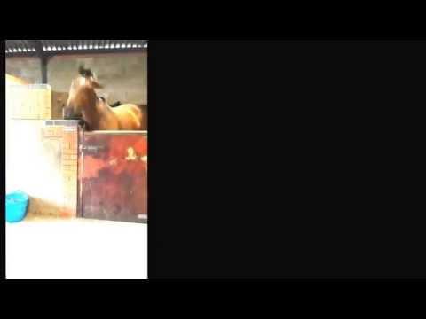 Xxx Mp4 Cheeky The Dancing Horse Xx 3gp Sex