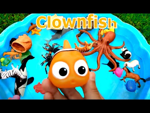 Xxx Mp4 Learn Colors With Wild Animals And Sharks In Blue Water Tub Toys For Kids 3gp Sex