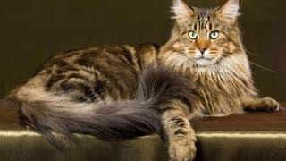 Tout savoir sur les expositions de chats