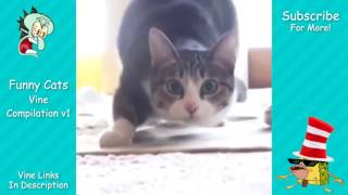 Funny Cats Vine & Video Compilation v1
