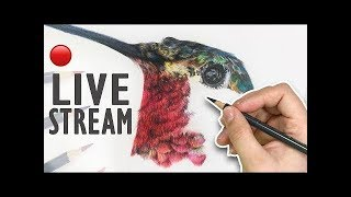 Drawing a Hummingbird in Colored Pencil | LIVE STREAM