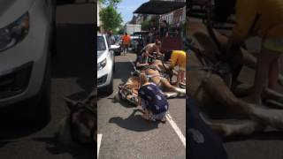 Carriage Horse Collapsed