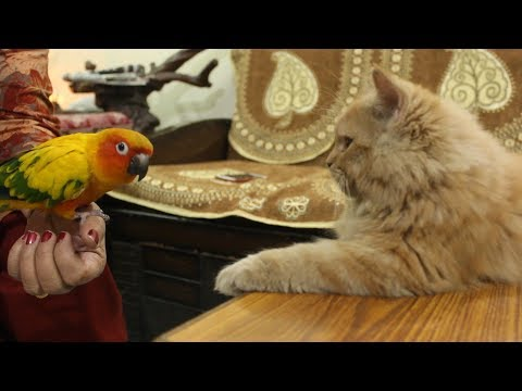 Xxx Mp4 Kitten Sees Bird For The First Time Wildly Indian 3gp Sex