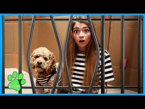 Xxx Mp4 Logan And The Box Fort Prison Escape Logan The Adventure Dog 3gp Sex