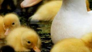 I Love, Tom T Hall, Little baby duck song