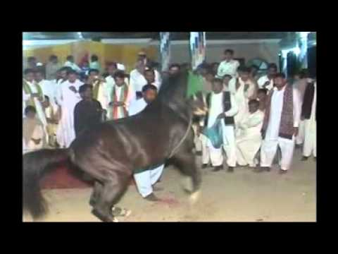 dancing horse pakistan gujrat haji chack wedding of kamran hussain jatt