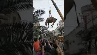 Chat se Janwar Utarne ka Manzar - Eid Qurban 2018 - Bakra Eid 2018