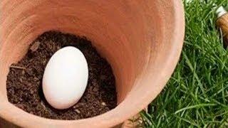 قم بزرع بيضة في تربة حديقتك، وما سيحدث بعد عدة أيام سيكون مفاجأة لك !!