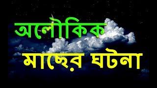 অলৌকিক মাছের ঘটনা ( Miracle Fish ) Islamic Bangla Story