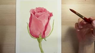 How to Draw and Paint a Red Rose with Watercolors