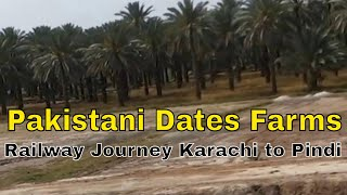 Dates Farms in Sindh Pakistan