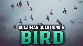 SULAIMAN (AS) QUESTIONS A BIRD ABOUT LOVE