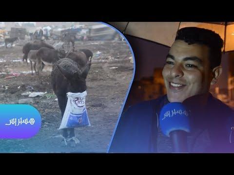 Xxx Mp4 حيوانات تتقاسم الحياة مع ساكنة سيدي مومن 3gp Sex