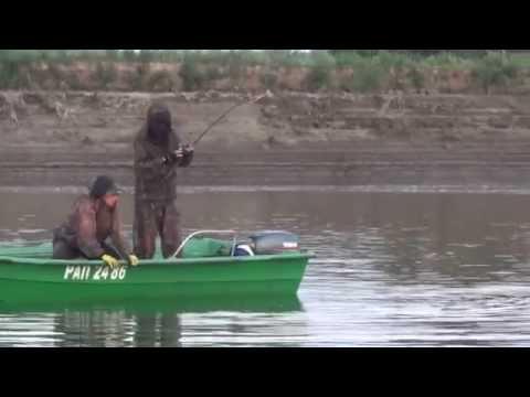 ловля сома волга июль 2013