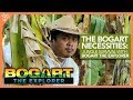 Download Lagu The Bogart Necessities Jungle Survival With Bogart The Explorer