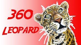 360 VR Sundari Leopard Snacks Wild