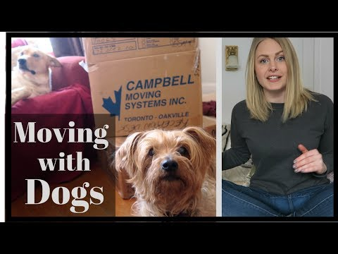 Xxx Mp4 Tips For MOVING With A DOG Reduce STRESS During A Move 3gp Sex