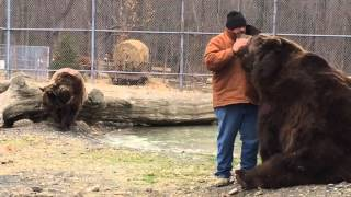 Kodiak bear grabs Jim back as he walks away...