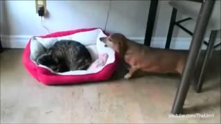 Des chats qui volent le lit des chiens!