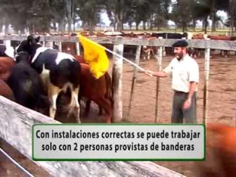 Instalaciones y Manejo del ganado
