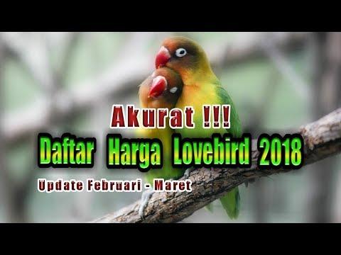 The price of lovebird 2018
