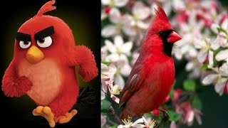 Angry Birds Movie in real life New