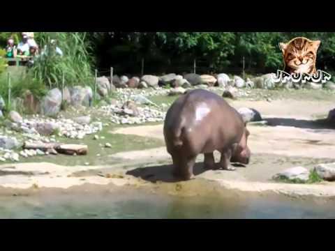 порно ролики про бегемотов