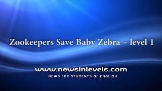 Zookeepers Save Baby Zebra – level 1