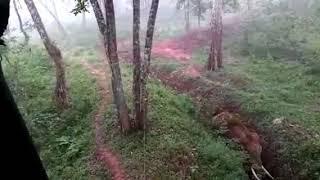 വഴികാട്ടി മുന്നില് കൊമ്പന്; വയനാട്ടില് പത്തോളം ആനകള് കാട്ടിലേക്ക് | Elephant Walking | Wayanad