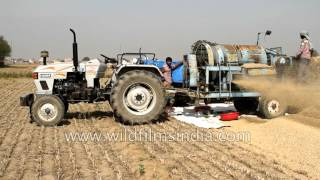 Source of India's favourite staple food - wheat threshing with Eicher tractor