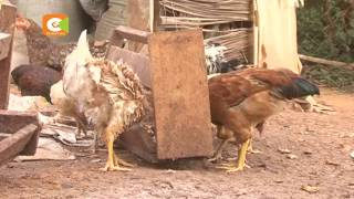 Poultry industry players want ban on Uganda imports extended